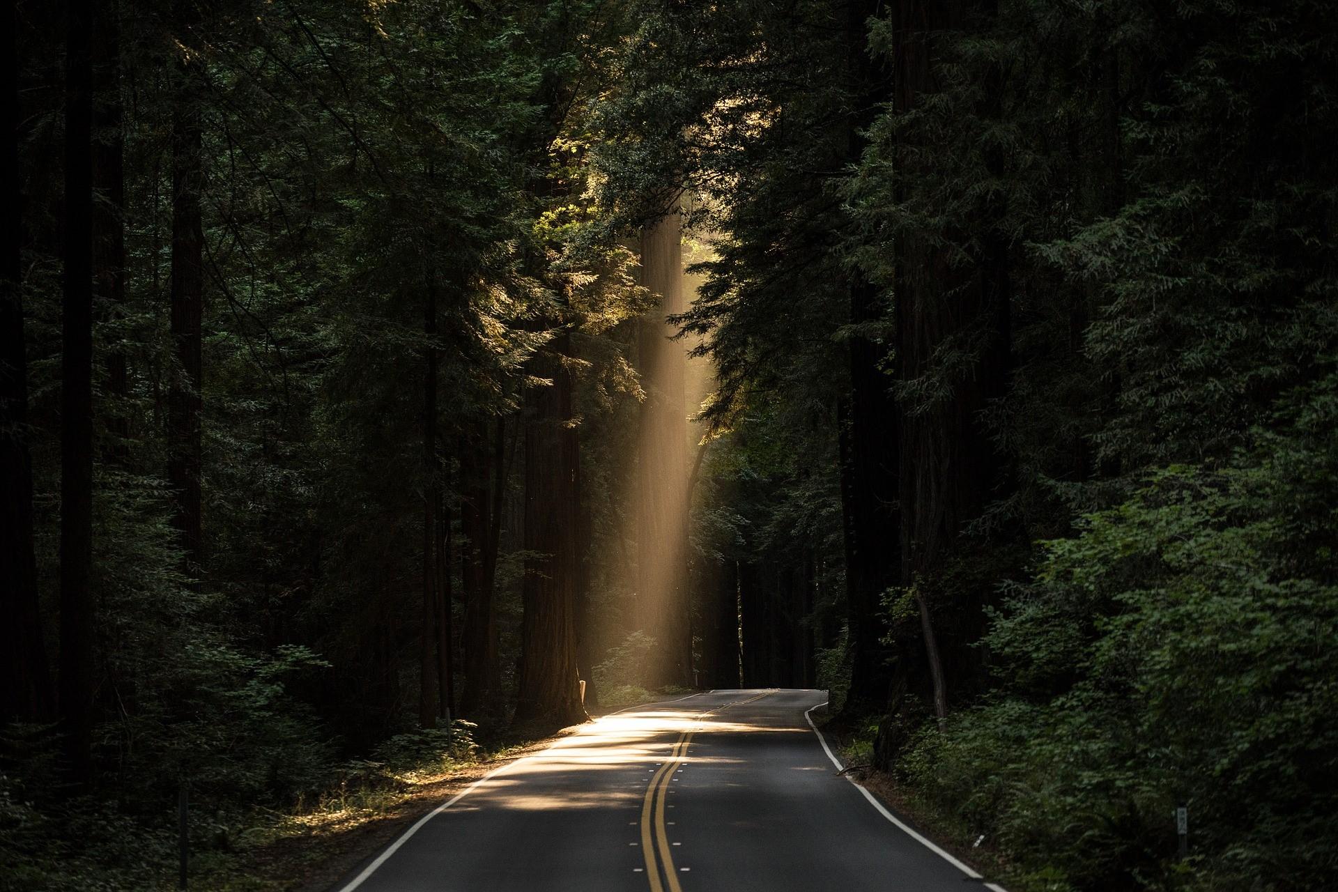 Het pad naar verlichting